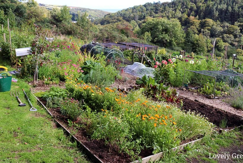 Tips on starting a new vegetable garden in the fall including ideas for clearing land, mulching, compost, and amending soil #gardeningtips #vegetablegarden
