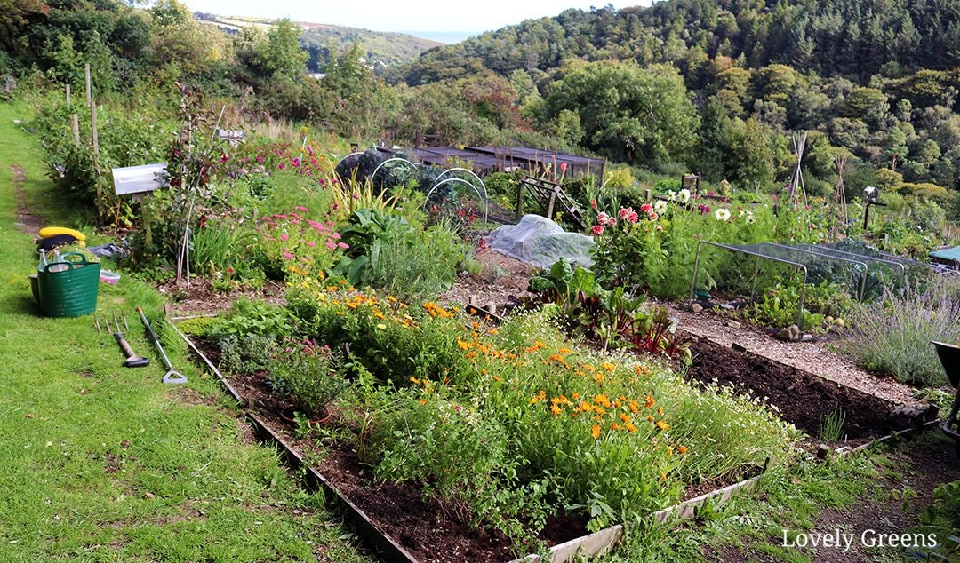 Starting a New Vegetable Garden from Scratch