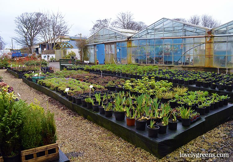 Ballanelson Nurseries on the Isle of Man