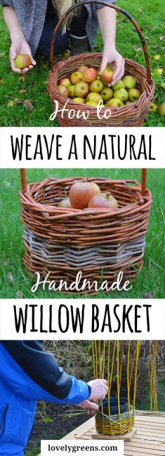 How to make a Willow Basket -- a free video compilation showing how to weave willow into a naturally sturdy basket. Use for picking apples, foraging, or in the kitchen #lovelygreens #willow #weaving #homesteading #selfsufficient #simpleliving #baskets