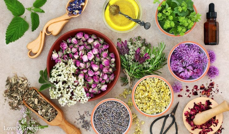 Using Plants, Flowers, and Herbs for Skincare