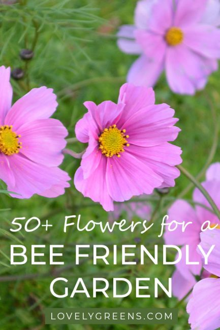 50+ Flowers to grow in a Bee Friendly Garden. Includes flowers that bloom throughout the year from January to December #flowergarden #honeybees #lovelygreens