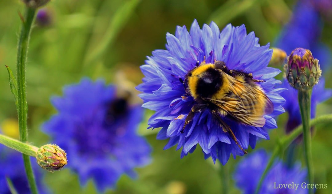 50+ Flowers and Trees to grow in a Bee Friendly Garden