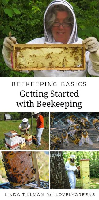 Advice on getting started beekeeping from master beekeeper Linda Tillman #beekeeping #honeybees #savethebees #lovelygreens #beekeeper