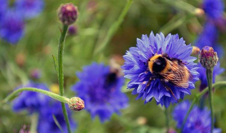50+ Flowers to grow in a Bee Friendly Garden