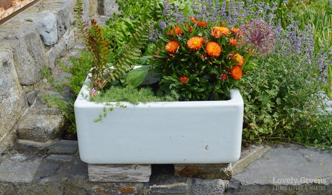 Vintage sinks are ready-made planters that even have a built-in drain. They're great for growing vegetables, flowers, and creating mini-ponds, and look beautiful too. This piece includes tips on where to find them and how to plant them up as vintage sink planters #containergarden #planteridea