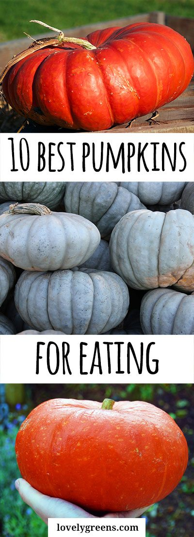 The 10 Best Pumpkins to grow for Eating #halloweenpumpkin #squash #vegetablegarden #foodgarden