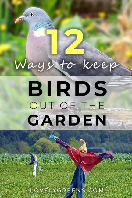 Ordinaire Natural Ways To Keep Birds Out Of The Garden Without Hurting Them. Includes  Various Netting