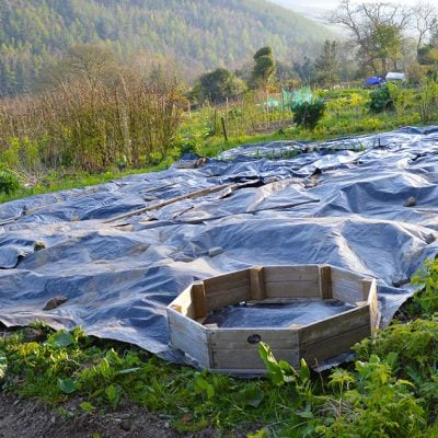 Clearing weeds the organic way: How to use black plastic sheeting to kill weeds. Polythene is a reusable plastic material that you can lay on the ground to clear it of weeds and grass. It makes converting land into gardening space both easy and eco-friendly. No herbicides needed #lovelygreens #vegetablegardening #gardeningtips