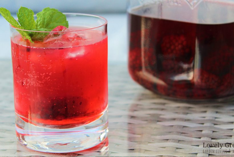 This simple blackberry gin recipe uses just three ingredients and is perfect for late summer cocktails or stored for a Christmas tipple. Also includes advice for growing your own blackberries in the home garden #lovelygreens #infusedgin #ginrecipe #gincocktail #liqueurrecipe #blackberryrecipe #foraging #berryrecipe