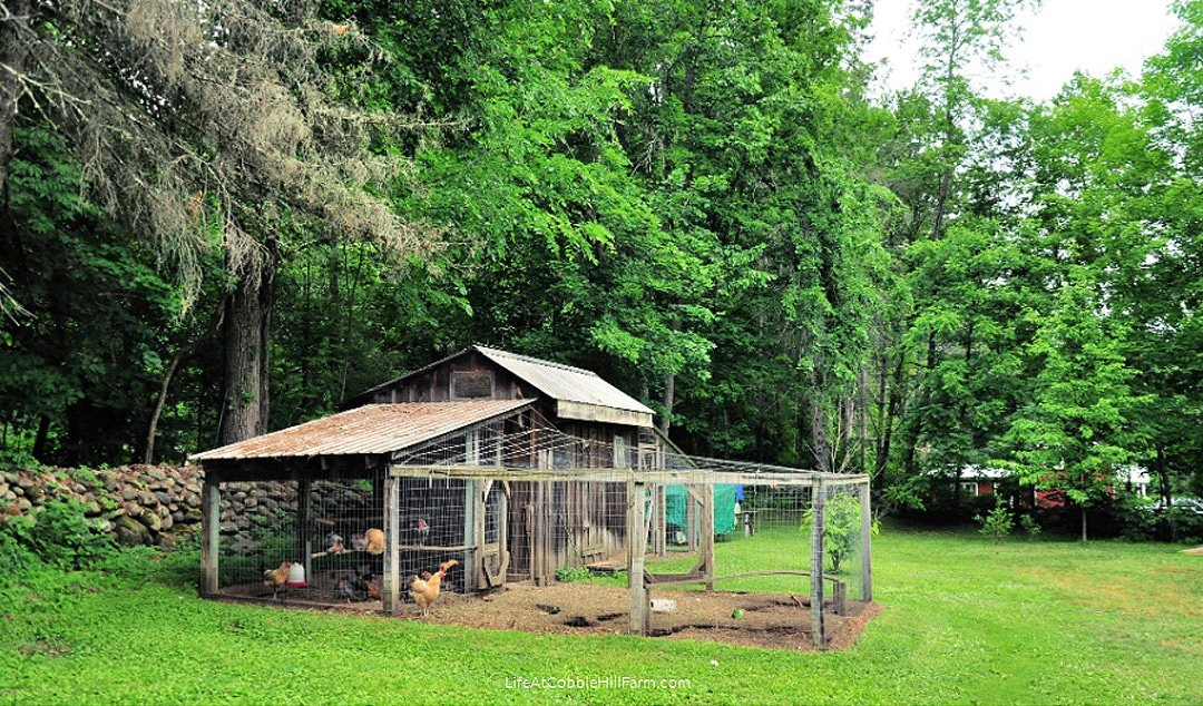 Advice on Building a Permanent Chicken Coop