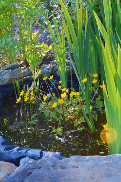Tips on how to build a small pond to attract frogs and other wildlife into the garden. Includes information on placement, size, materials, and maintenance #lovelygreens #organicgardening #slugcontrol