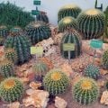 The Desert and Arid Land Glasshouse at the Jardin des Plantes Botanical Garden