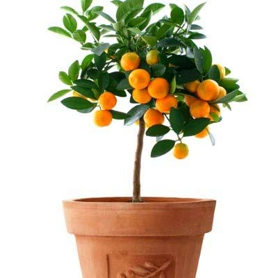 5 Edible houseplants and how to grow them