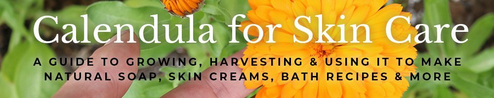 Calendula a guide to growing and using it in skin care