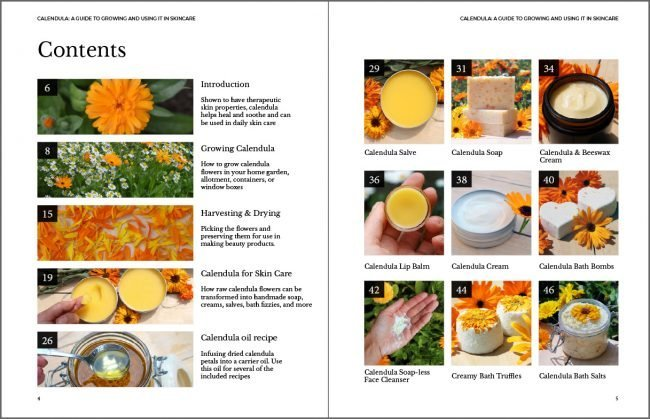 Calendula: A guide to Growing & Using it in Skin Care by Tanya Anderson as seen on BBC's Gardeners' World. Includes detailed info on calendula, growing tips, harvesting, & using it in skincare recipes #herbalism #plantbasedskincare #herbs