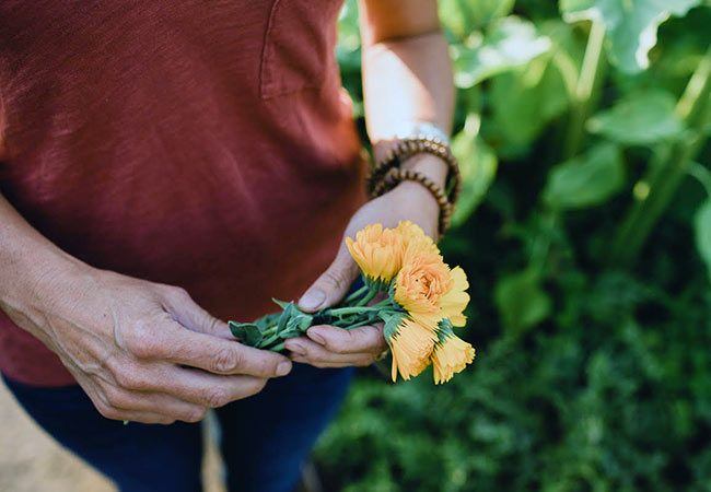 Gardening with Companion Plants & Edible Flowers -- holding a bouquet of calendula flowers