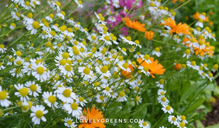 Grow a Beauty & Skincare Garden
