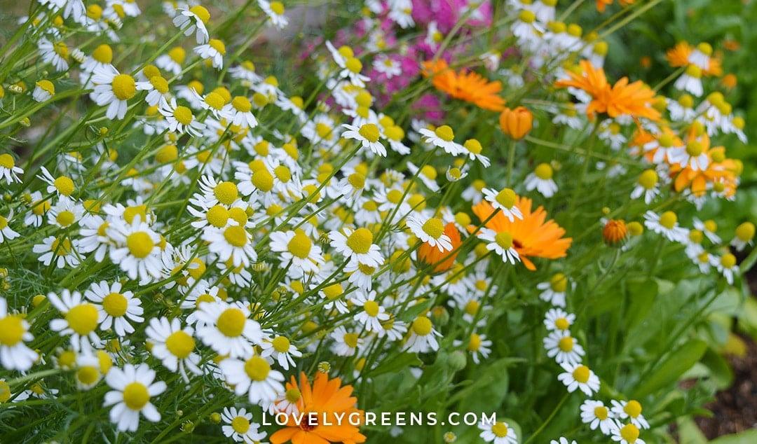 Grow a Beauty & Skincare Garden