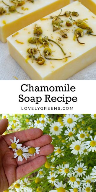 Natural chamomile soap recipe made with essential oil, chamomile flowers, and naturally colored yellow using annatto seeds #lovelygreens #soaprecipe #soapmaking