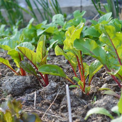 16 vegetables to grow for autumn harvests