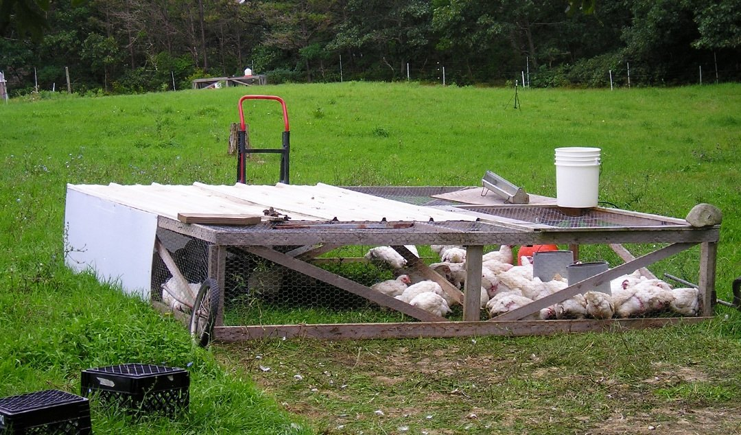 How and why to keep hens inChicken Tractors