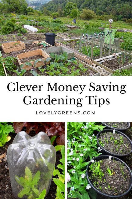 Ways to save money in the vegetable garden including making your own compost, sowing seeds frugally, and using recycled materials #gardeningtips #vegetablegarden