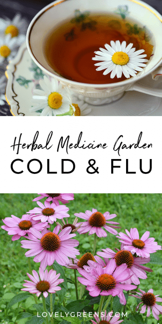 Almost 30 herbal remedies for the cold and flu. Includes info on how they are used and tips on adding them to your herbal medicine garden #herbalism #coldremedy #herbalmedicine