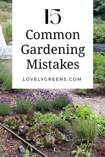 Save yourself time and effort by avoiding these 15 common gardening mistakes. Includes tips on spending, what to grow, and when to grow it #vegetablegarden #gardeningtips