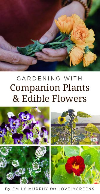 Gardening with Companion Plants & Edible Flowers