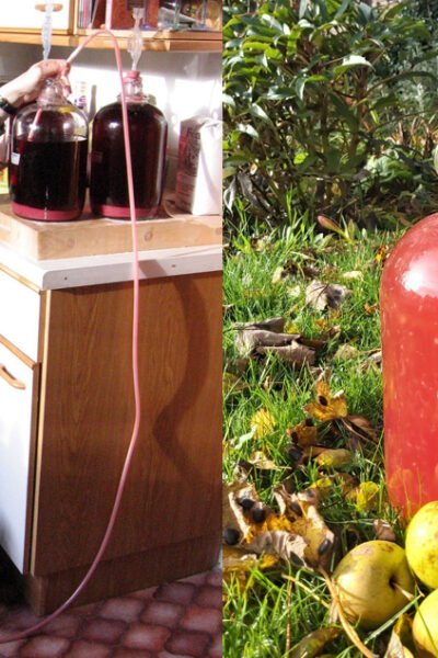 Make homemade country wine with berries, flowers, and fruit. An introduction to winemaking including recipes for strawberry wine & rose petal wine #homesteading #winemaking #fermenting