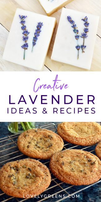 How to grow English lavender and creative lavender ideas and skin care recipes. Includes a video #lavender #lavenderideas