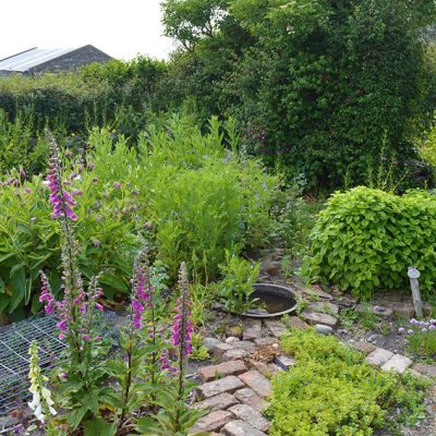 Ancient Medicine: a herbal remedies garden from 100 years ago