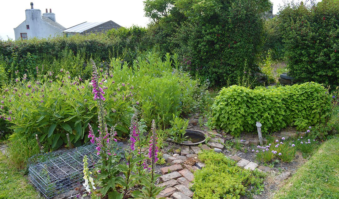 Traditional Herbal Medicine Garden: Plants used for herbal remedies in a 19th Century Folk Remedies