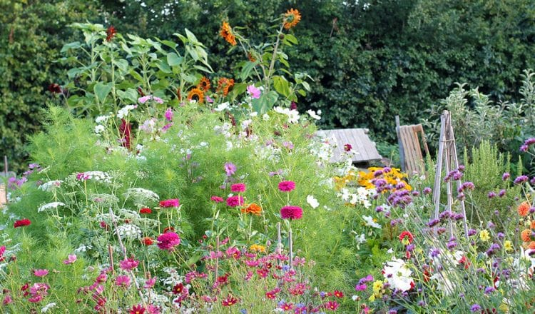 Grow your own Cut Flower Garden for Homegrown Bouquets