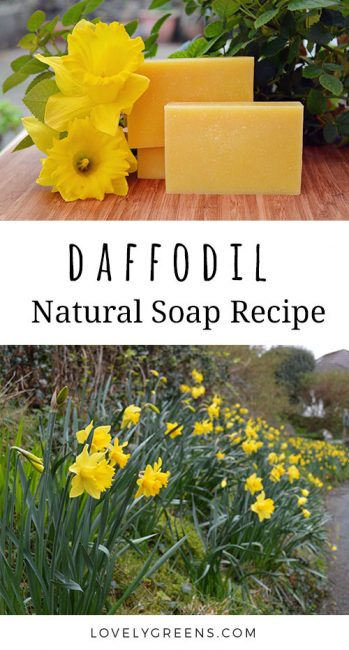 Daffodil flower soap recipe using real flowers