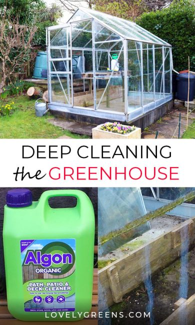 Tips on deep cleaning the greenhouse top to bottom to prepare it for young plants and seedlings. Includes information on greenhouse pests and pathogens, eco-friendly cleaners, and getting rid of algae and moss. Includes a video at the end #lovelygreens #organicgardening #vegetablegarden