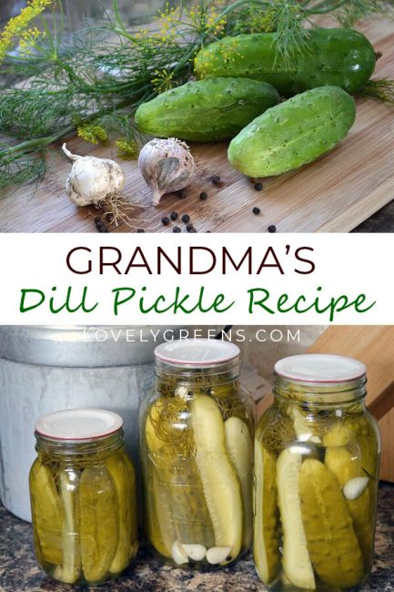 Grandma's recipe for crunchy Dill Pickles. Using fresh cucumbers, dill, spices, and brine, this flexible recipe follows a simple hot water bath method. Once made, the pickles can be stored for up to a year #lovelygreens #canning #preserving #dillpickles #preservetheharvest #gardenrecipe #kitchengarden #hotwaterbath #cucumberrecipe