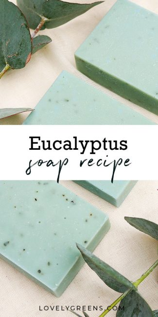DIY instructions for making this Eucalyptus Soap Recipe. Eucalyptus essential oil opens airways making this a great soap for the cold and flu season #soapmaking #soaprecipe #coldsandflu