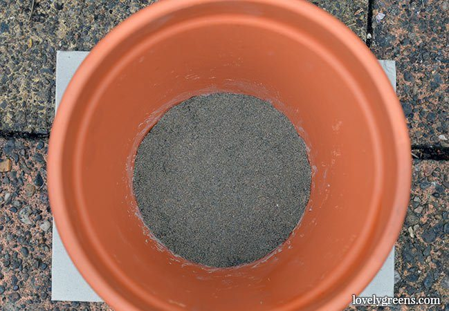 DIY Olla Watering Pots -- a low-tech solution that keeps plants watered in dry conditions. Also saves time and water.