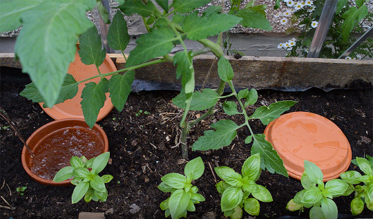 How to make an inexpensive Olla -- low tech watering systems for plants based on an ancient farming principe #veggiegarden #watering #permaculture
