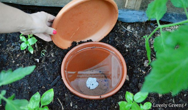 DIY Olla Watering Pots -- a low-tech solution that keeps plants watered in dry conditions. Also saves time and water #gardeningtips #diygarden