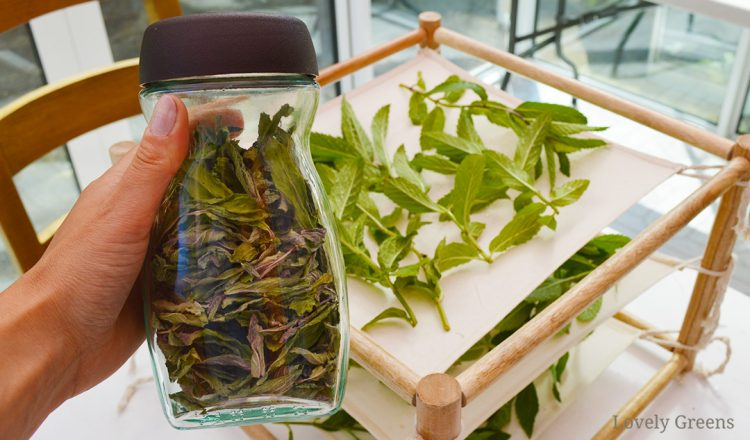 Three Ways for how to Dry Mint Leaves
