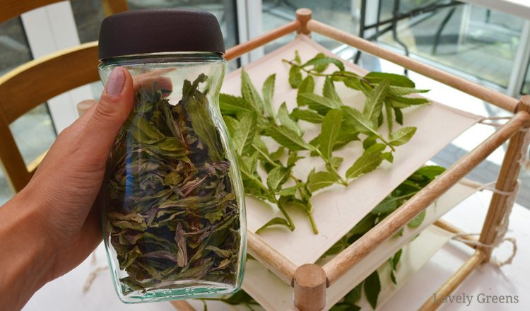 Three Ways to Dry Peppermint Leaves