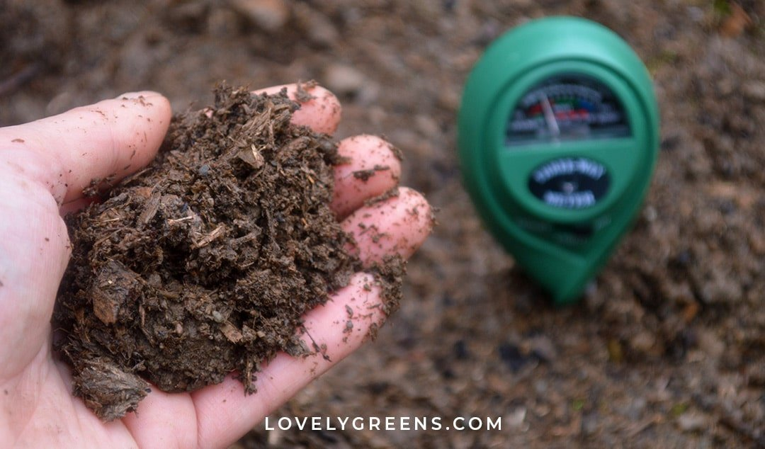 The Easiest Way to Test Soil pH and Amend it