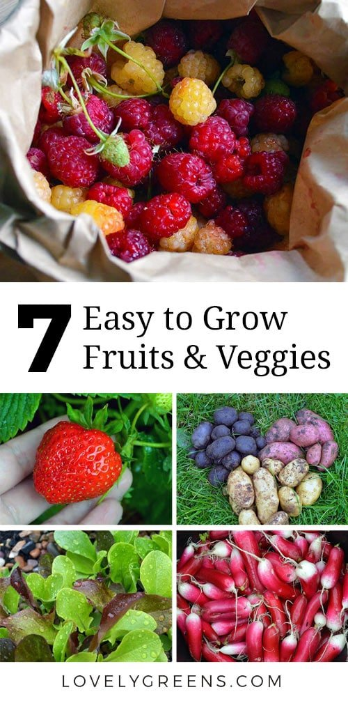 When starting your first garden, keep it simple with these easy to grow fruit, herbs, and vegetables. They're simple to maintain and give bang for your buck #veggiegarden #easytogrow #easytogrowveg #vegetablegarden #firstgarden #growfood #perennials