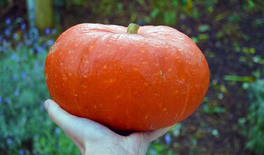 The 10 Best Pumpkins to grow for Eating
