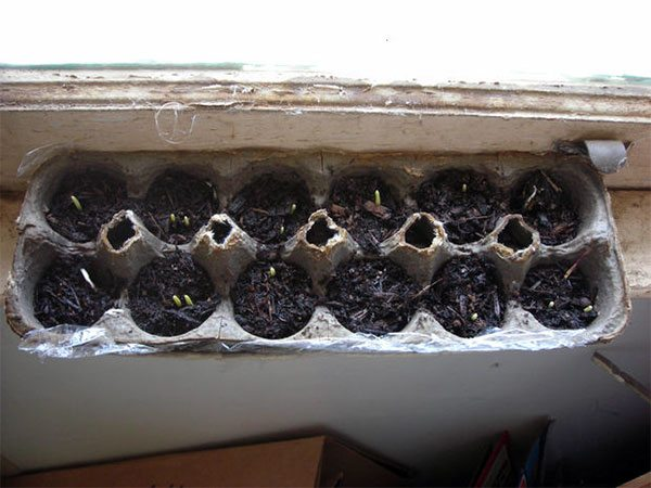 12 Recycled Ideas for Seed Starting: Ideas for starting off your seeds in recycled materials and containers including toilet paper rolls, eggshells, and upcycled plastic cloches. #lovelygreens #gardening #vegetablegardening