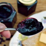 Elderberry jelly recipe with elderberries, lemon juice, sugar, and pectin. Makes an excellent preserve that can be served in both sweet and savory dishes #foraging #canning #jellyrecipe