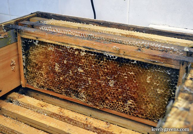 A Couple of Surprises on Honey Extraction Day